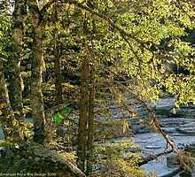 Glacier Autumn - MacDonald Creek by rocamiadesign
