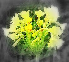 Daffodils Alone by na320