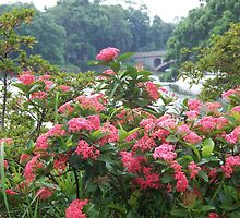 Beautiful red flowers in front of lake surrounded by trees in Asia by Joseph Green
