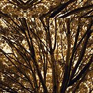 Abstracted Composition With Branches and Trees  August 14, 2010 by Ivana Redwine