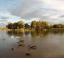 Late Afternoon At The Lake. by shortshooter-Al