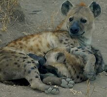 Spotted Hyena with Pup by Richard Shakenovsky