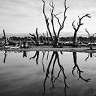 Swamp in Mandurah by Dejezza