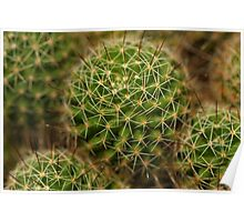 Points of view - cactus Poster