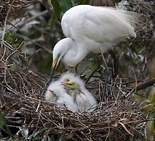 Feeding Intermediate Egret Family by Neil Bygrave (NATURELENS)
