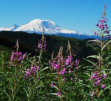 Summer at Mt. Rainier by Tori Snow
