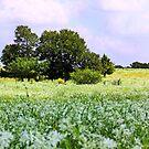 Milkweed Pastoral by Linda Woods