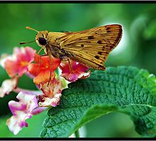 Skipper by Mattie Bryant