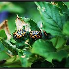 Orange & Black Beetles by Mattie Bryant