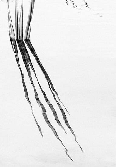 reeds (b&w) by nadine henley