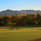 Autumn colours, Kaikoura Golf Course, NZ, August 2009 by Odille Esmonde-Morgan