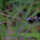 Emerald Damselfly by Hugh J Griffiths