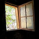 Old cellar window by Julie Sleeman