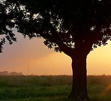 Tree at Sunrise by Brian Gaynor