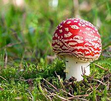 Magic Mushroom by Scott Carr