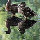Doubled Ducks by Debbie Ashe