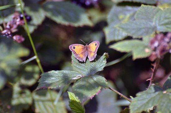 Gatekeeper Butterfly - Woolston Eyes by Chris Monks