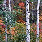 Autumn Aspens - Park City, Utah by FoxSpirit