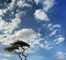 Lonesome Pine by John Ellis