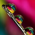 Tropical Droplets by Sharon Johnstone