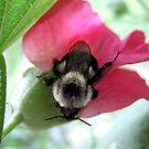 Bee One by LouiseK