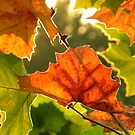 Summer, Silver Linings  ~ Series Fall colors in August 1of 1 by NatureGreeting Cards ccwri