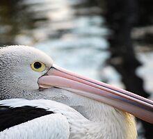 'Pelican' by Luke Weinel