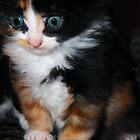 Kitten 5 by TREVOR34