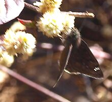 Duskywing skipper butterfly by ♥⊱ B. Randi Bailey
