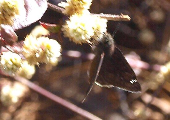 Duskywing skipper butterfly by ♥⊱ B. Randi Bailey