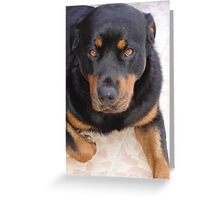 18 Months of Rottweiler Greeting Card
