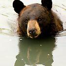 Black Bear by Sean McConnery