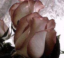 Through the Centuries.....The Rose by trueblvr