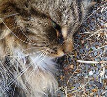 Random CAt by Thomas Scurr