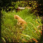 Orange cat hunt for mouse by oxygen