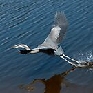 Great Blue Heron by Gouzelka