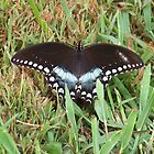 Spicebush Swallowtail Butterfly by Michele Markley