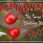 100% Challenge Winner. (Challenge still running) by Qnita
