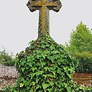 Ivy Cross by relayer51