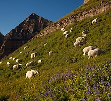 Mountain Grazers by Kent Keller