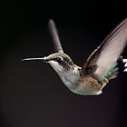 Ruby On Black / Ruby Throated Hummingbird by Gary Fairhead