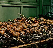 bed of onions by AnnGossen