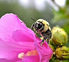 Busy As A Bee by Jeannie Chiara