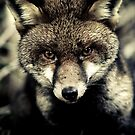 Portrait of a fox by Arek Rainczuk