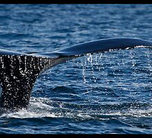 Whale Tail by Trevor Murphy