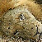Sleepy big cat(Go away!) by jozi1