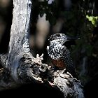 Giant Kingfisher - Zambezi River by Sharon Bishop