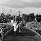Birds by Gwynne Brennan