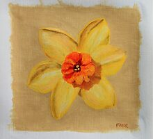 daffodil by Andy Farr