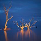 Evening Light   NSW by Ben Messina